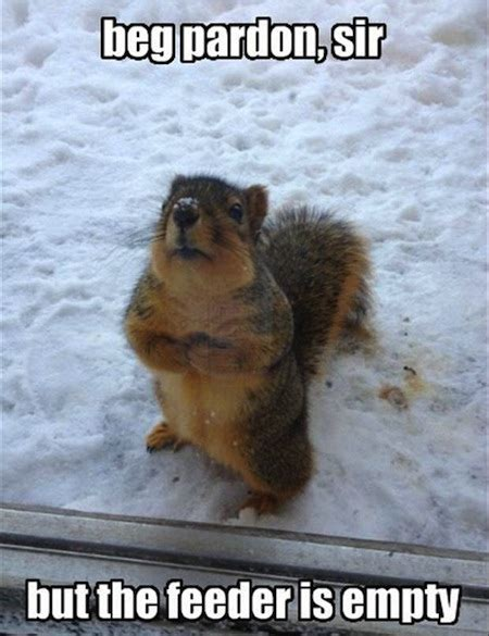Funny Squirrel Memes - bravest information bin 13 funny squirrel photos and memes