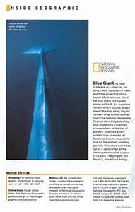 Blue Whale Photo in National Geographic Magazine – Natural ...