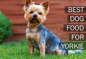 top 5 best dog foods for yorkies 2017 buyers guide With best dog food for yorkies