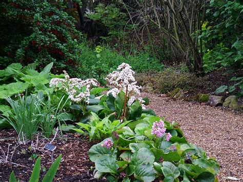 gravel garden paths chelsea physic garden