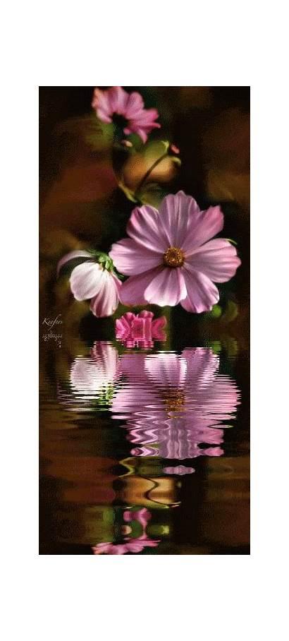 Flowers Animated Photobucket Gifs Garden Keefers Flower