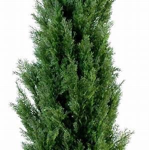 Plante Exterieur Artificielle : cypr s artificiel feuille vert vente d 39 arbuste m dit rann ens artificiels en ligne ~ Teatrodelosmanantiales.com Idées de Décoration