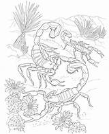 Coloring Pages Dessert Animal Popular sketch template