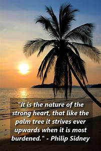 Being Strong An... Inspiring Palm Tree Quotes