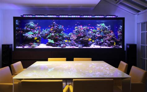 marina home interiors aquariums harrods fish tank design and installation