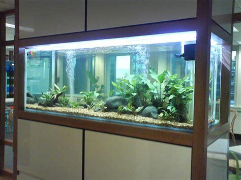 cr 233 ation sur mesure d aquariums grand format
