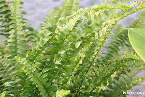 Pflanzen Die Wenig Licht Brauchen Heißen : zimmerpflanzen die wenig licht brauchen gr ne und ~ Lizthompson.info Haus und Dekorationen
