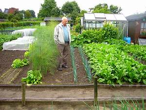 Organic vegetable gardens vegetable garden guide for Organic vegetable gardening