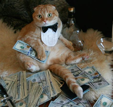 Rich Cat Meme - rich cats rolling in cash memes pinterest cat scottish fold and cat bow tie
