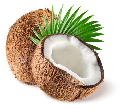 cuisine en zinc tout savoir sur la noix de coco