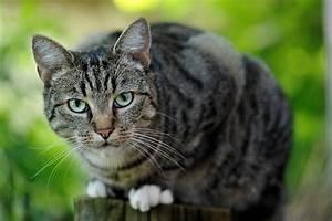 Katze Im Garten Begraben : die katze tiere view fotocommunity ~ Lizthompson.info Haus und Dekorationen