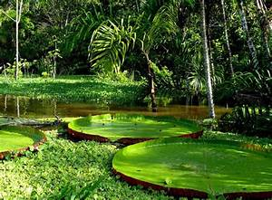 Morning Wishesh  Rainforest Amazon Wildest Beauty On The Earth