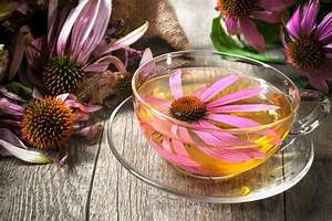 16 Reasons Why You Should Drink Echinacea Tea Every Day