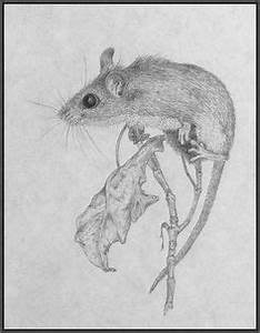 Little field mouse in pencil by ~30030610 on deviantART ...