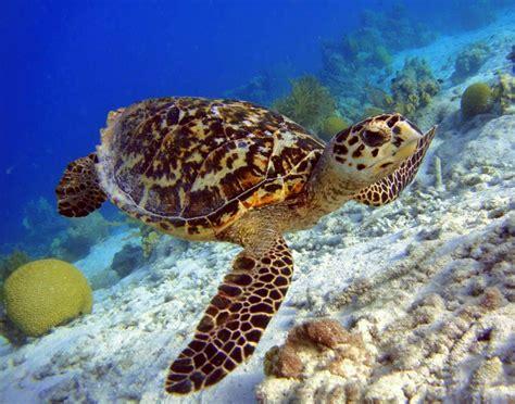 Hawaii Sea Turtle Service And Adventure (11 Days)