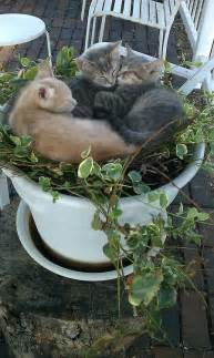 Flower Pot Kittens