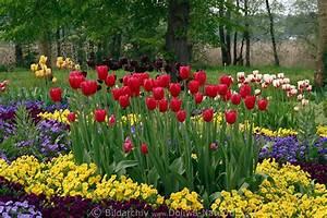 Tulpen Im Garten : tulpen veilchen beete foto gartenbeete gartenrabatte in ~ A.2002-acura-tl-radio.info Haus und Dekorationen