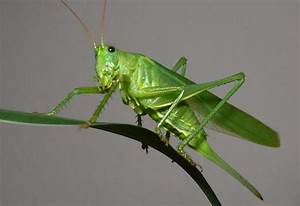 Grasshopper - Looking to CookThe UK & Ireland's best ...