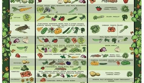companion planting  hows  garden growing
