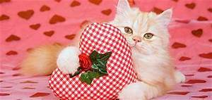 10 Cat-Shaped Chocolates for Your Valentine's Day Sweetie ...