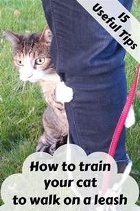how to teach a cat to use the toilet how to your cat to walk on a leash zoomzee org