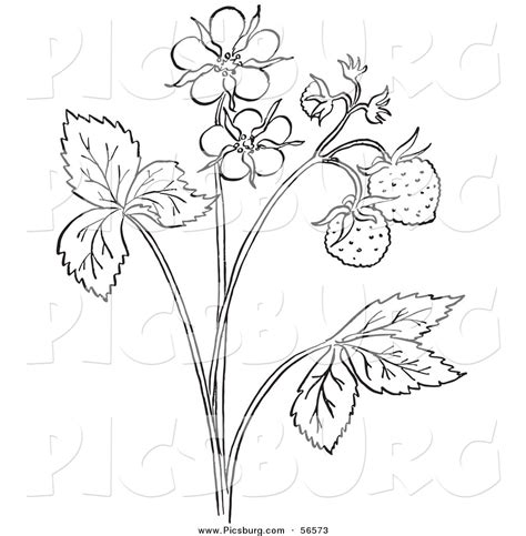 Coloring Clip by Plant Outline Clip 20 Free Cliparts Images