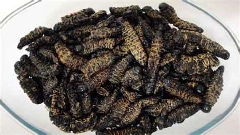 cuisine africaine pdf madora amacimbi mopane worms zimbokitchen com