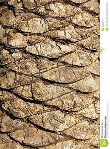 Palm Bark Stock Photo  Image Of Detail  Abstract  Detailed