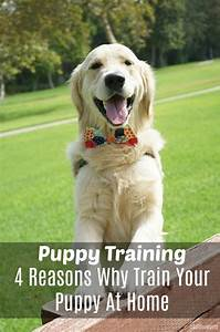 puppy training 4 reasons why train your puppy at home With dog training at home