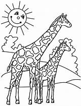 Coloring Pages Giraffes sketch template