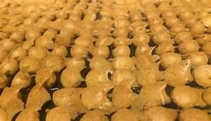 Kartoffeln Für Hunde : hundeleckerlies hundekekse mit der backmatte hundekekse hundekuchen rezepte hunde ern hrung ~ A.2002-acura-tl-radio.info Haus und Dekorationen