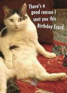 Funny Birthday Ecards Cats