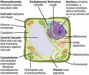 4 3  Eukaryotic Cells