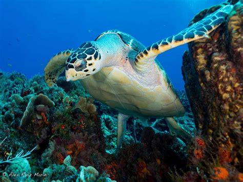Cozumel Dive Dive Cozumel From Playa Cozumel Reef Marine