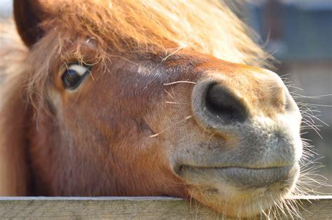 horse nose horses say hi spielen pferd march