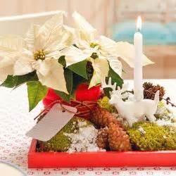 Weihnachtsstern Pflanze Kaufen : weihnachtsstern pflanzen pflege und tipps mein sch ner ~ Lizthompson.info Haus und Dekorationen