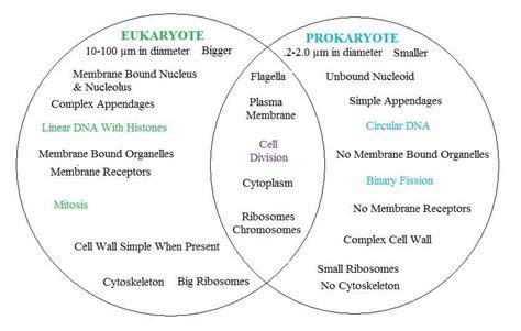 prokaryote vs eukaryote science