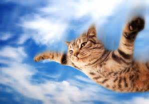flying cat beautiful scenery photography
