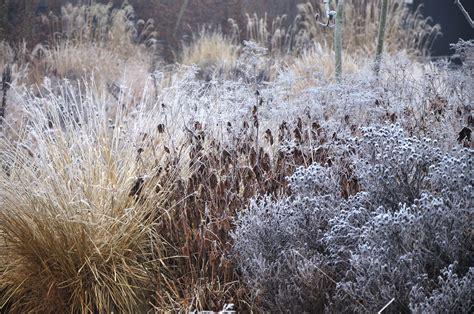 Winter Garden :  9 Tips For A Colorful Winter Garden