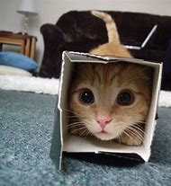Funny Cats in Boxes