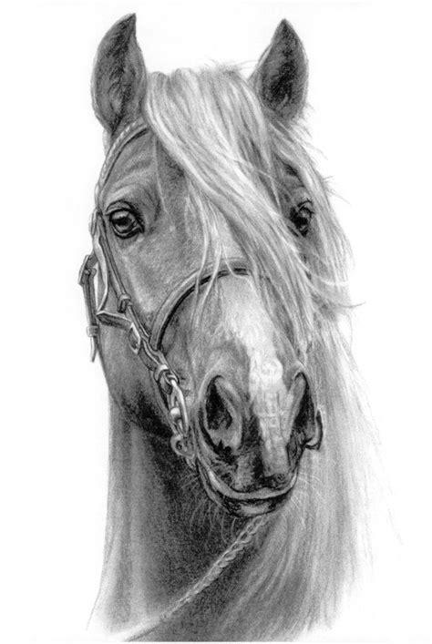 Pencil Drawing of Horse Head Sketch