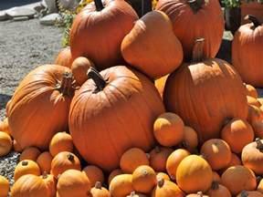 Celina Pumpkin Patch free download great big pumpkin patch celina programs