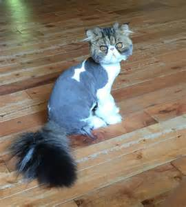 cutting cats hair pictures july 15 2016