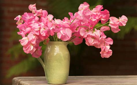 Background With Vase And Pink Flowers