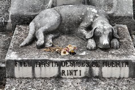 rinti  dogs grave  havana cuba dark island