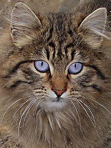 cats wikiquote