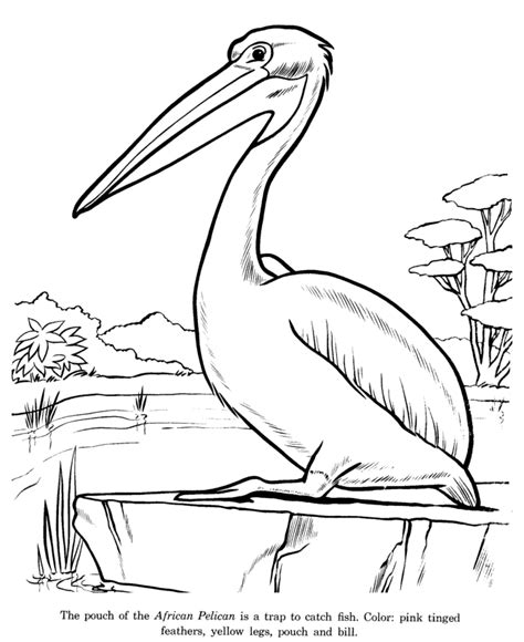 kids drawing pages az coloring pages