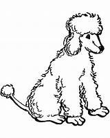 Poodle Coloring Pages Standard Printable Poodles Template Sheets Drawn Nova Getcolorings Library Clipart Clip sketch template