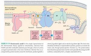 Eukaryotic And Prokaryotic Cells  U2013 Basicbiochem