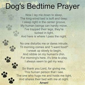 Best 25 Pet Loss Quotes Ideas On Pinterest Dog Loss Quotes Loss Of